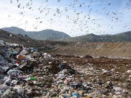 Photo of Riflessioni sul delicato problema della tutela dell'ambiente