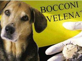 Photo of Pensionato avvelena cani nel parco a San Basilio, identificato e denunciato dalla Polizia  per maltrattamenti e uccisione di animali