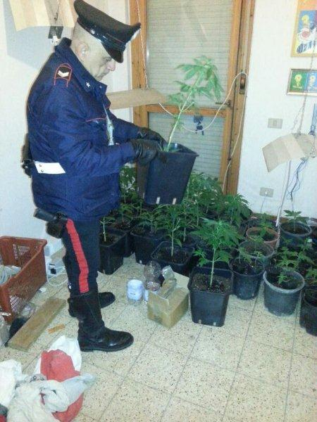 Photo of Coltivava marijuana in casa: sequestrate 55 piante
