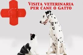 """Photo of Avere a cuore la salute dei nostri """"amici"""" cani e gatti"""
