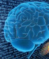 Photo of Dalle cellule staminali, il primo mini-cervello umano