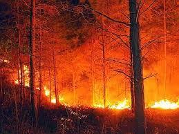 Photo of Dopo aver litigato con il proprietario di casa gli incendia il terreno