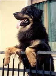 "Photo of Spese condominiali anche per i cani ""residenti"""