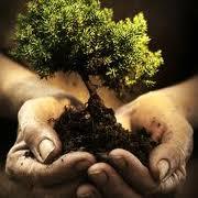 Photo of L'albero della vita