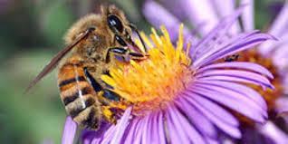 Photo of Basta uccidere le api