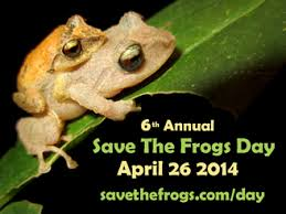 "Photo of ""Save the Frogs Day 2014"" – Salviamo gli Anfibi"