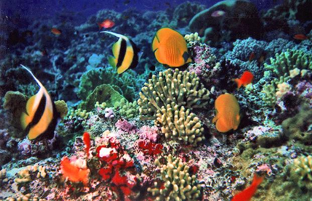 Photo of Unesco: allarme per la scogliera corallina  a rischio in Australia
