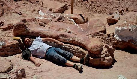 Photo of Il dinosauro più grande del mondo scoperto in Argentina