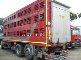 Photo of Bloccato dalla Polizia Stradale un camion spagnolo per trasporto animali. A bordo, suini morti e altri sofferenti