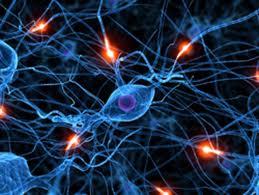 Photo of Cervello in equilibrio grazie alle connessioni