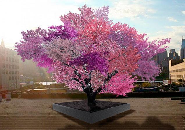 Photo of Un solo albero per 40 varietà di frutta
