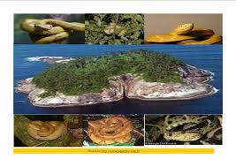 Photo of Queimada Grande, l'isola dei serpenti