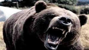 Photo of Trentino, per orsi 'dannosi' cattura o abbattimento