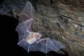 Photo of La luce polarizzata guida i pipistrelli