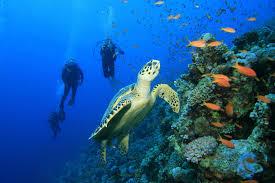 Photo of Subacquei: mai immergersi con il raffreddore e non salire in aereo prima di 24 ore dall'immersione