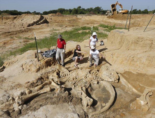 Photo of Uno scheletro di mammut, quasi completo, rinvenuto occasionalmente in Texas – FOTO