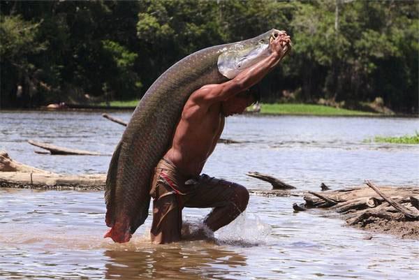 Photo of Rischia l'estinzione il pirarucù, il pesce gigante dell'Amazzonia