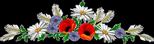 alman fiori campo
