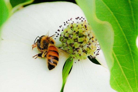 Photo of Moria delle api: la produzione del miele cala del 50%