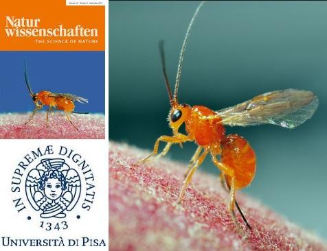 """Photo of Gli insetti """"annusano"""" il pericolo"""