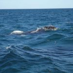 balena-1