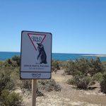 pinguini-precedenza