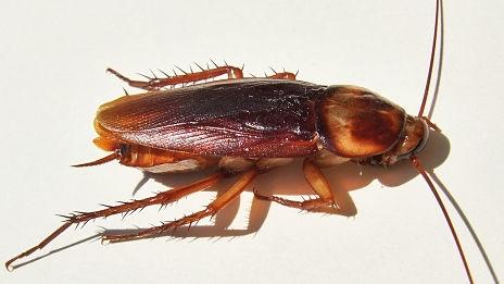 Photo of Scoperto il comportamento anticonformista degli scarafaggi