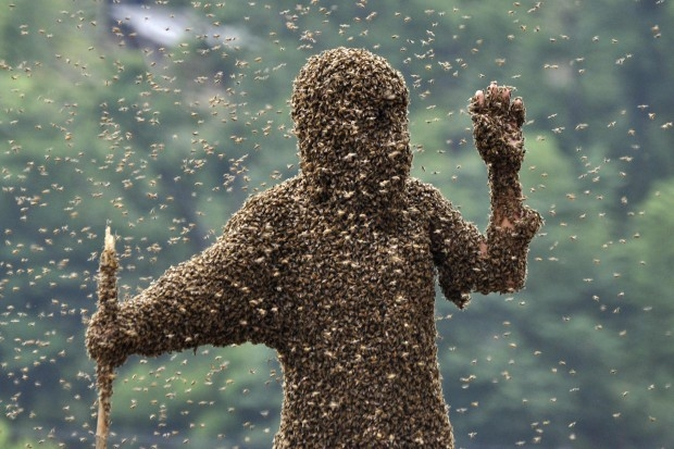Photo of La natura insegna. Ladri di miele attaccati da 30 mila api