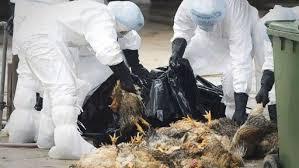 Photo of Flash – Aviaria: focolaio in Francia. Importazione pollame bloccato in  8 paesi