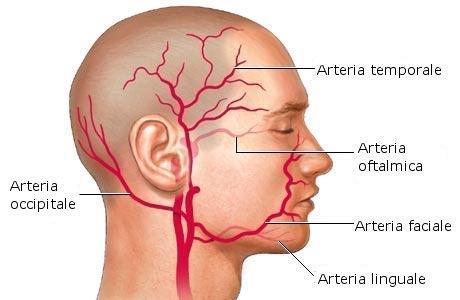 Photo of Medicina – Dalle pareti delle arterie, il futuro del cervello