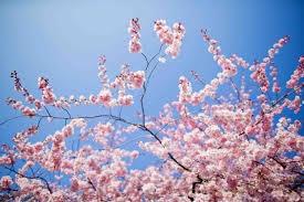 Photo of Primavera
