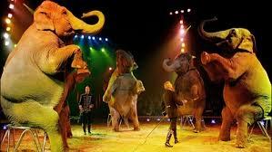 Photo of Circo Barnum: ieri sera, l'ultimo show con elefanti