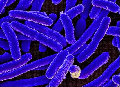 Photo of Allarme dagli Usa: super-batterio, non risponde ad alcun antibiotico