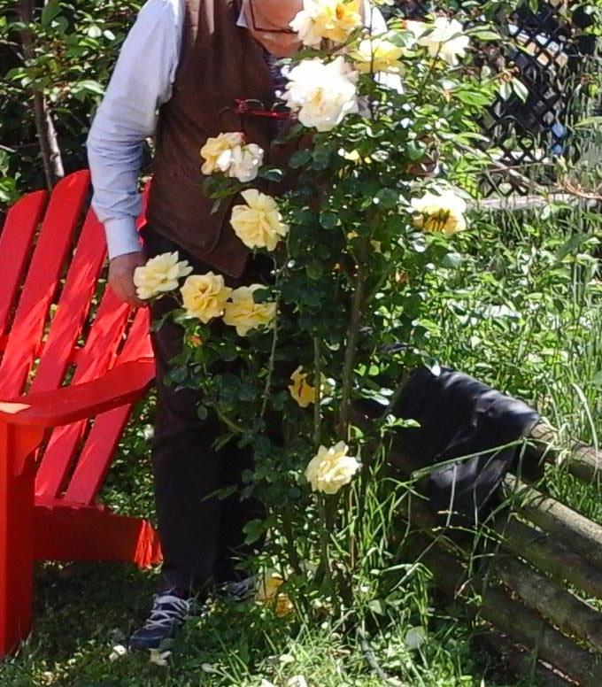 Photo of La rosa di maggio