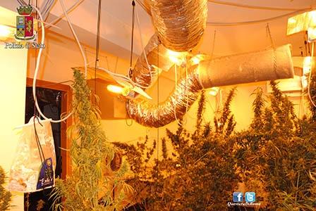 Photo of Rocca di Papa – Una villa trasformata in serra per marijuana. Due arresti – VIDEO