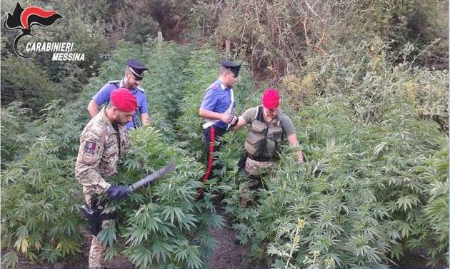 Photo of NEWS – È il vero motivo della modifica alla legge sugli stupefacenti? In Sicilia, l'assessore all'agricoltura innaffia piantagione  insieme al fratello. Arrestati
