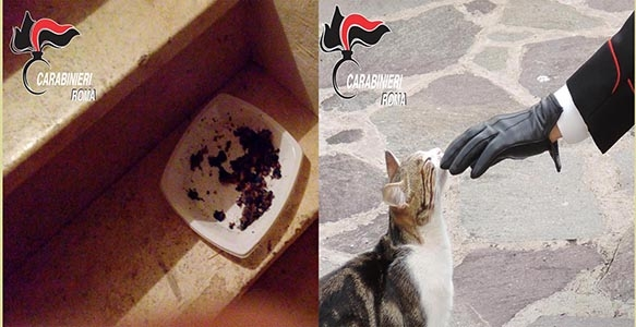 Photo of Ciciliano – Infastidito, uccideva i gatti con carne avvelenata. Denunciato pensionato