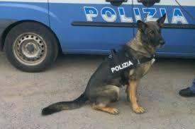 Photo of Velletri – Peluches con droga. Un arresto