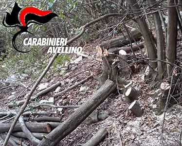 Photo of Sorpresi a rubare legna in bosco protetto: un arresto ed una denuncia