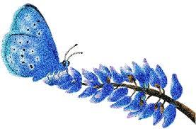 alman farfalla azzurra