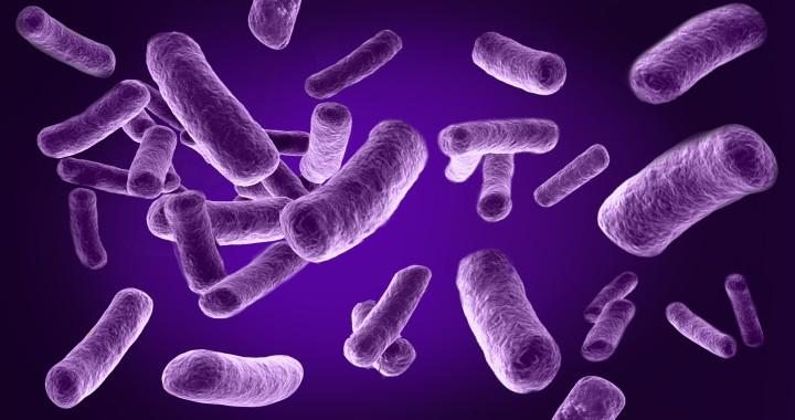Photo of Batterio intestinale per la 'cura' della sclerosi multipla
