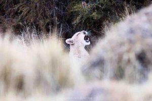 (foto: Andrea Pozzi - Puma - Cile)