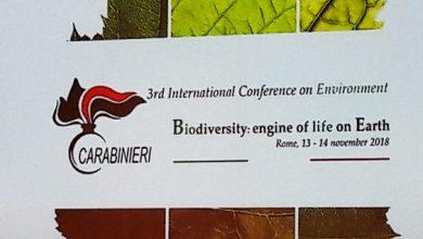 Photo of Biodiversità, motore della vita sulla Terra