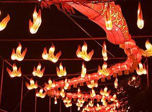 Photo of Forest: A Magic Lantern Art Festival – sue interviste e foto
