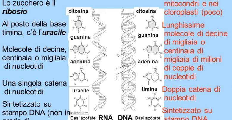 scienza-RNA+DNA (foto web)