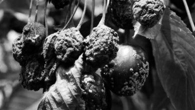 Photo of Un frutto