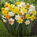 alman-Narciso (foto web)
