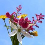 alman-mazzolino di fiori (foto web)