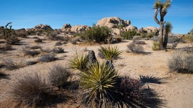 terreno-arido-asma (foto web)