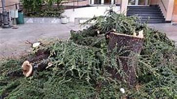 albero-secco-tagliato